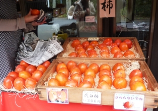 101113代白柿
