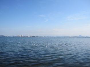 120101 湖岸のカモメ