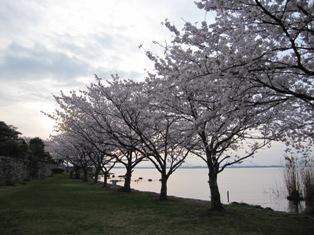 120416 桜