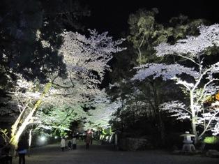 120418 夜桜