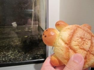 120428 亀のパン