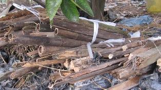 121014 木材まとめ
