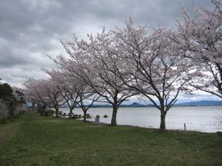 130407 湖岸の桜