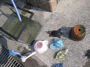 130504 水槽掃除